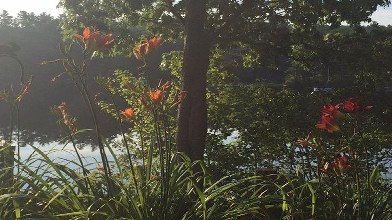 Vue sur le jardin et le lac près du pont
