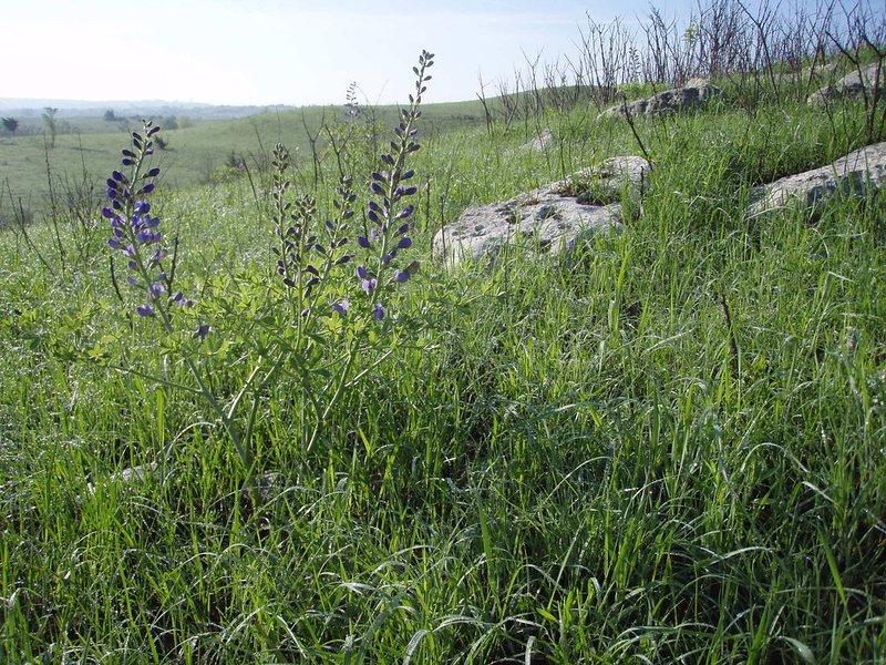 El entorno nativo de la pradera de pastos altos de StoneHouse en plena floración.