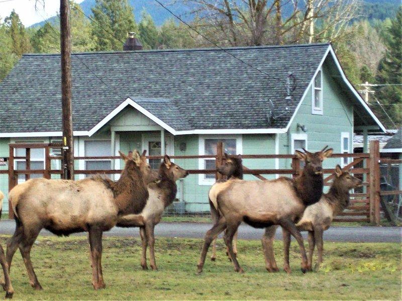 CHARMING MT. RAINIER GETAWAY! Downtown Packwood /Close to Rainier National Park, holiday rental in Packwood