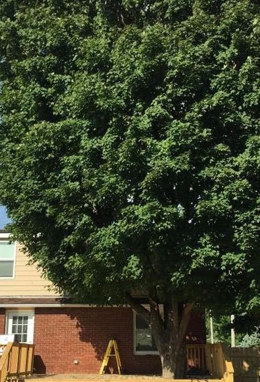 Large tree to shade you on the deck.