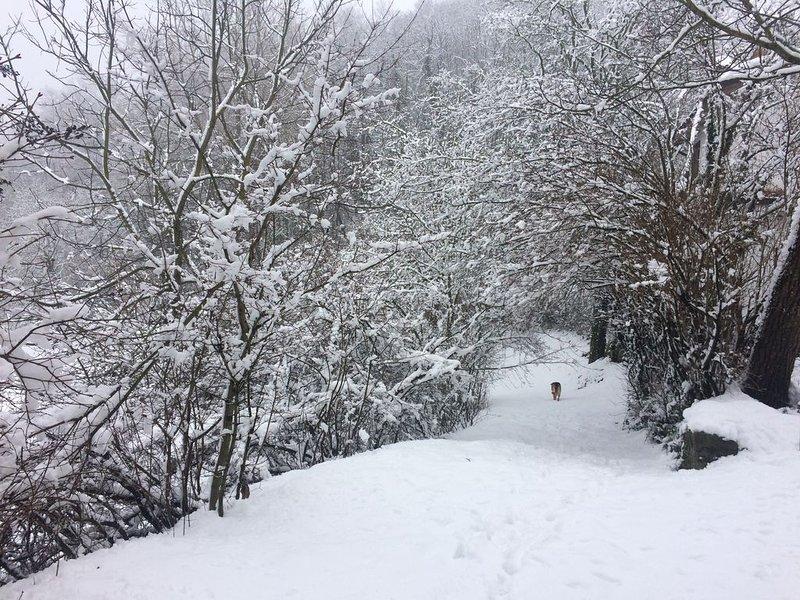 ... quand la neige fait le paysage de conte de fées ...
