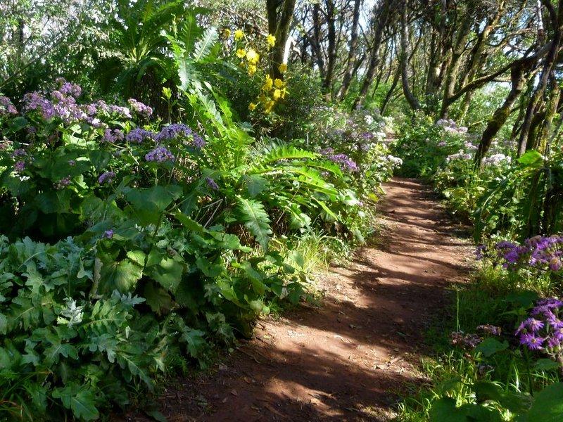 Spring in the Garajonay National Park