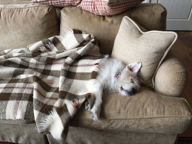 Even dogs need rest! Yes, we are dog friendly.