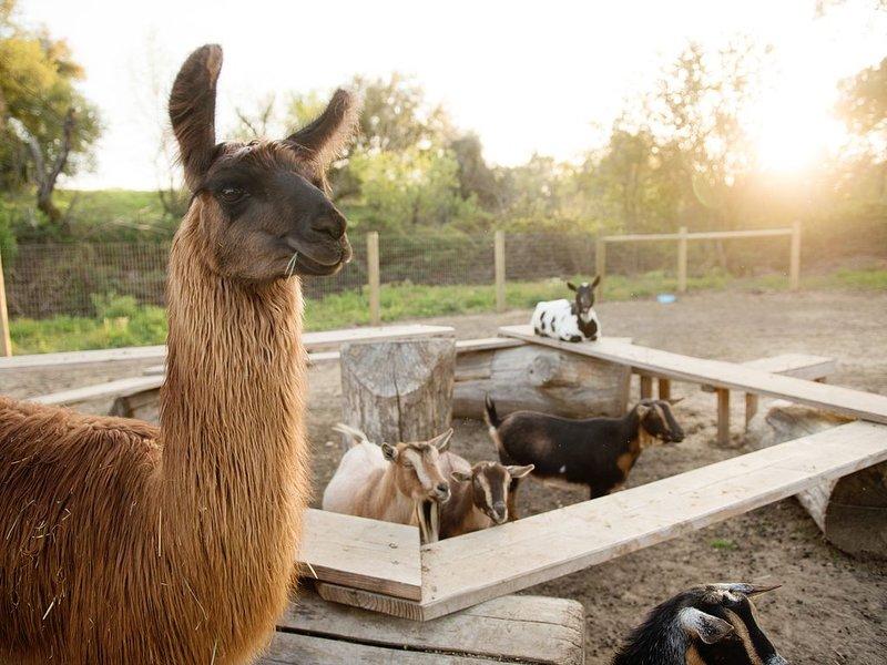 10 Acre Farmcation Experience, location de vacances à Lincoln