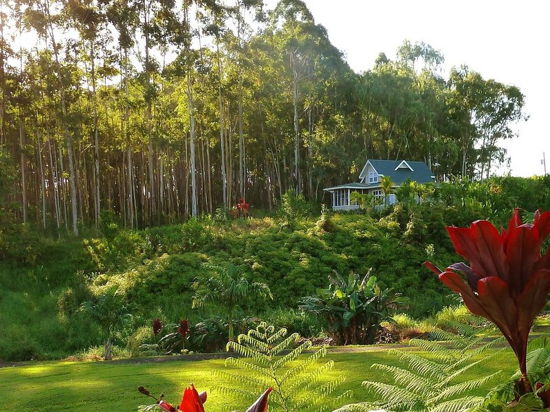 Quiet Cottage on 20 acres of Paradise. Ocean views,  water falls, total privacy., vacation rental in Laupahoehoe