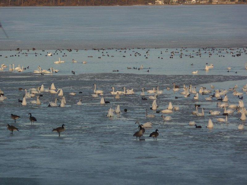 March Migration