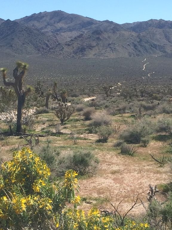 Joshua Tree National Park is a 15 minute drive from the cabin