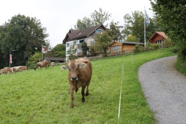 Ferienwohnung Neukirch für 2 - 3 Personen mit 1 Schlafzimmer - Ferienwohnung, holiday rental in St. Gallen