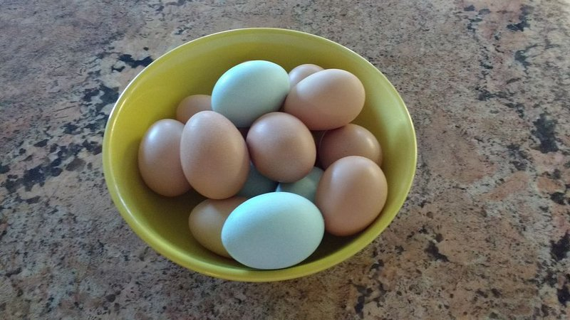 Delicious eggs for all!