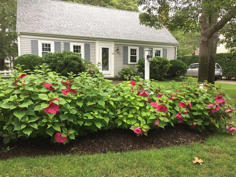 Cozy quiet home close to beach, dining, shopping, and all the Cape has to offer, holiday rental in Yarmouth