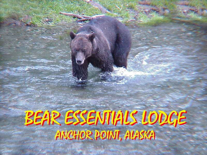 Bear Essentials Iliamna, holiday rental in Ninilchik