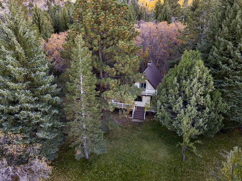 Hidden Pines Secluded Cabin on 3 Acres With Creek No Pets, holiday rental in Pine Valley