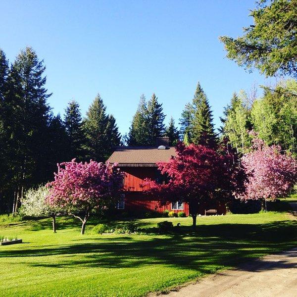 Geniet van de prachtige tuin. Crabapples bloeit in mei.