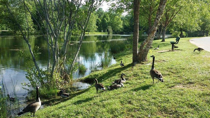 Owen park lakes, one half mile away