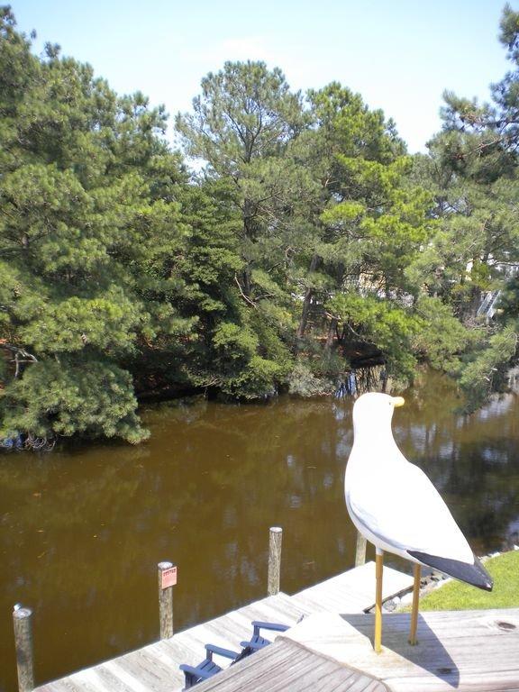Signature Mouette veille sur le canal.