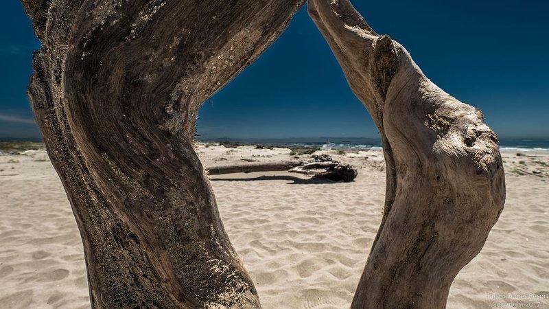 Camine millas de playa de arena: recoja dólares de arena y disfrute de todas las vistas.