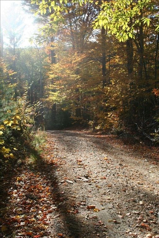 Road to Camp Mollocket in the Fall