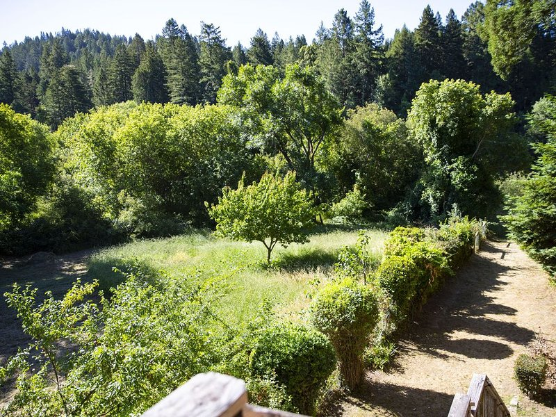 Peaceful lush green view out the back windows, running the length of the house.