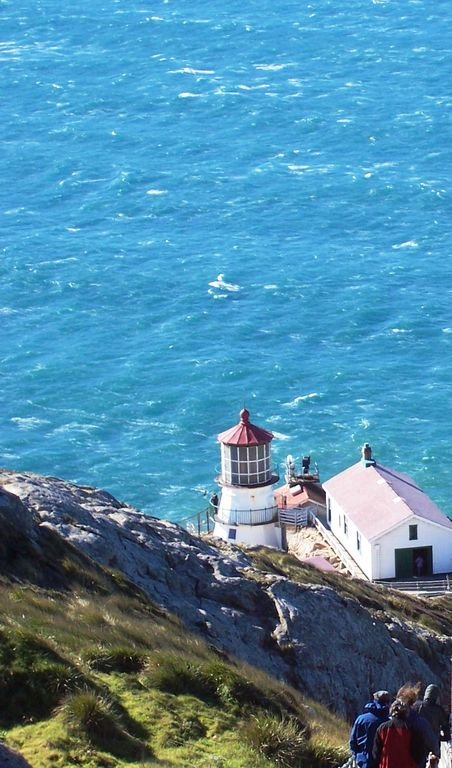 The nearby Point Reyes lighthouse is a great place to whale watch.