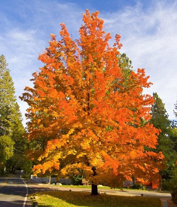 Impresionante color de otoño en la ciudad de Nevada.