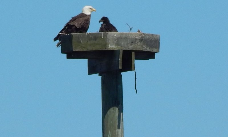 1 mile walk from Bath yet almost isolated-10 ft tide and eagles.  Perfection!!, vacation rental in Bowdoinham