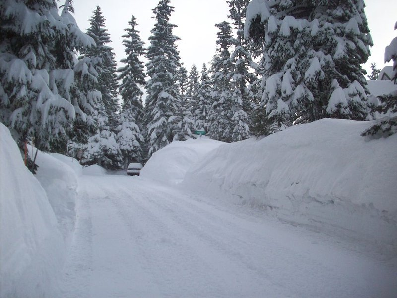 Late winter (March) view of road in front of cabin.