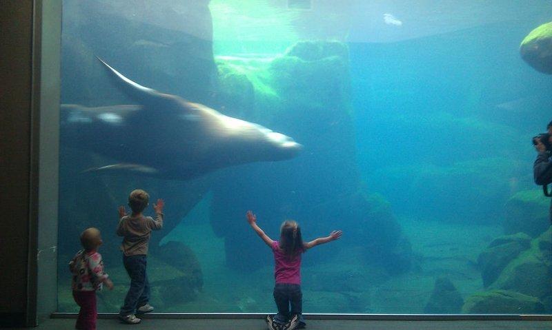 ¡Asegúrate de planear visitar el Alaska Sealife Center también!