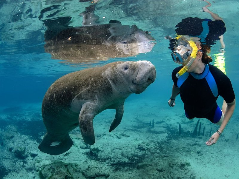 Swim with the Manatees at Crystal River