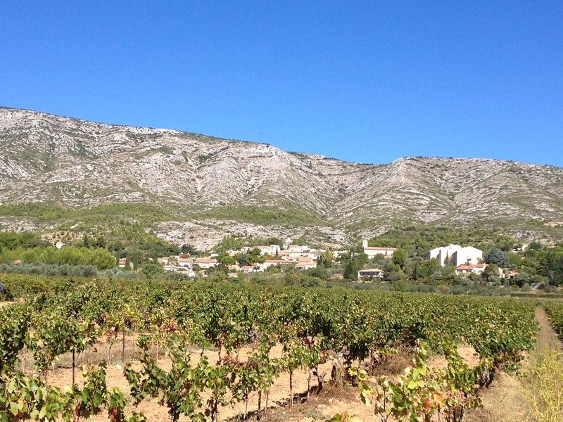 the village and its vines