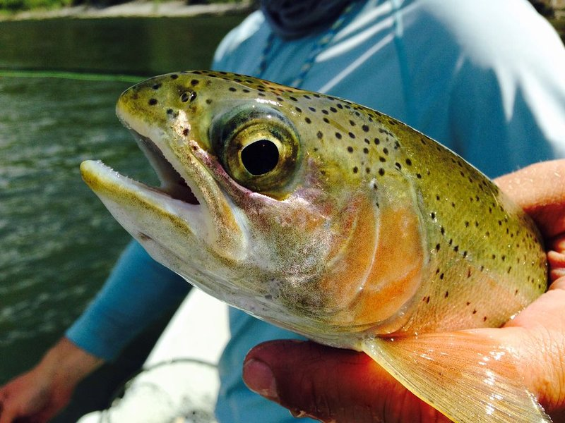 Sights and sounds of this Blue Ribbon Trout fishery will take your breath away!, aluguéis de temporada em Nye