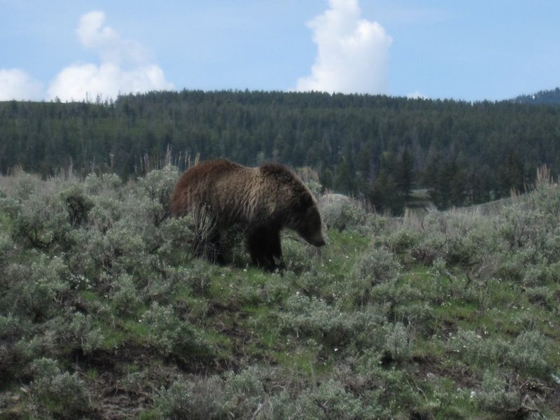 Venez voir tous les grizzlis en mai!