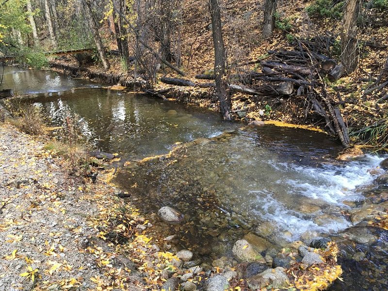 Twin Creek Cabin, Cottonwood Creek in Backyard Twice -VIEWS - MUST SEE 2.5 acres, location de vacances à Buena Vista