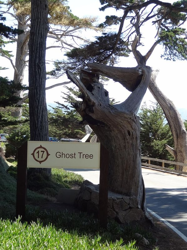 Ghost Tree-17 Mile Drive, short distance from cottage