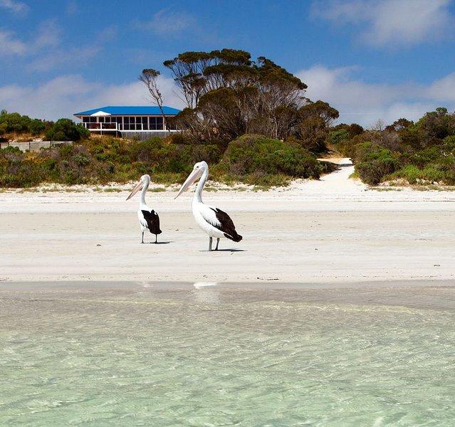 Beach 30 steps. Panoramic views. Kayaks.  Sensational ocean location in nature, vacation rental in Kangaroo Island