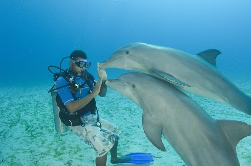 At Anthony's key (15 minutes away) you can dive or snorkel with the Dolphins