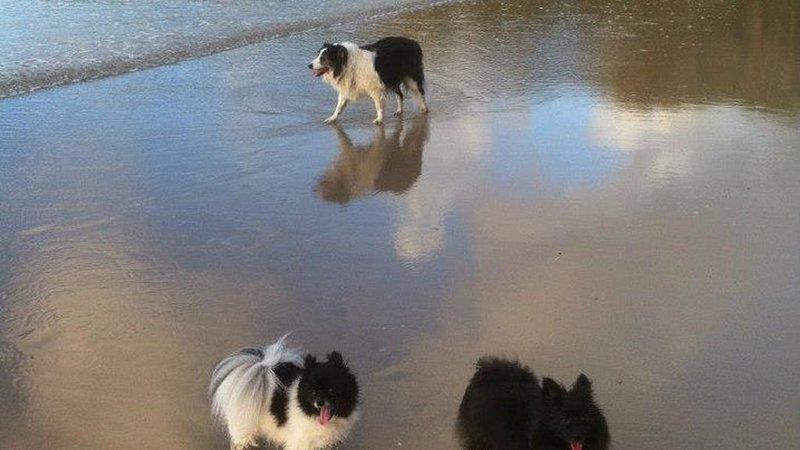 Three Beaches Currarong, casa vacanza a Currarong
