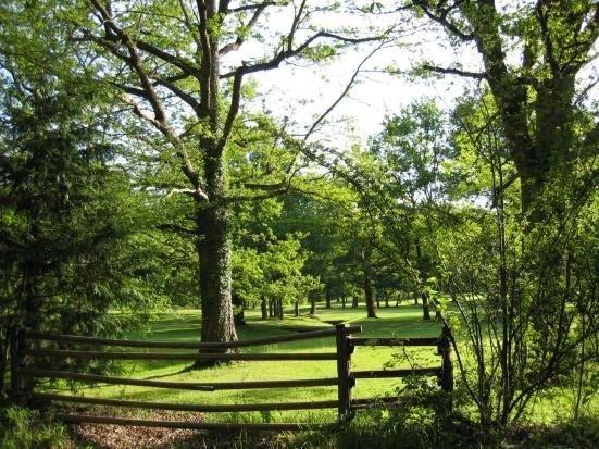 Forêt d'Orgi
