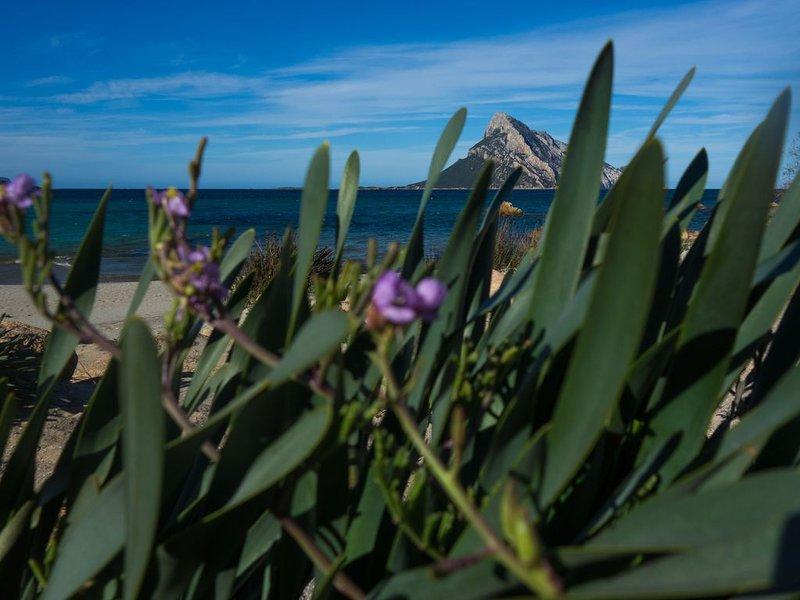 Lathyrus framing Tavolara Island, Porto Taverna. Sardinian spring