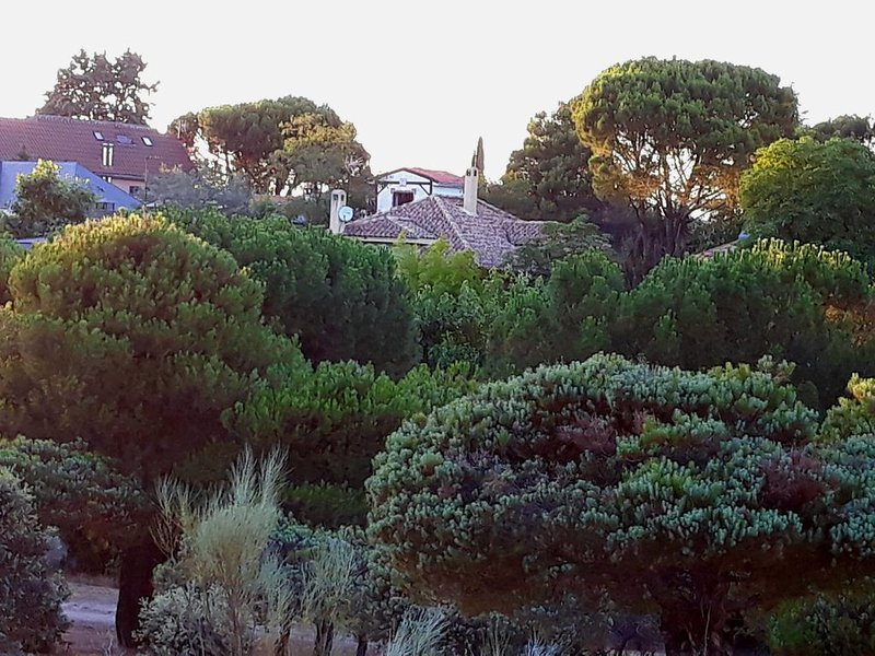 Vista da casa da floresta de pinheiros.