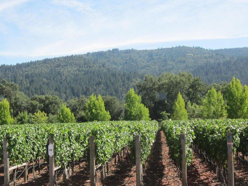 Des vignes à quelques minutes en voiture