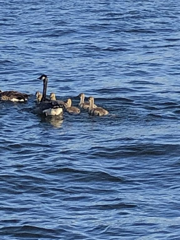 Wildlife/ Feed the ducks