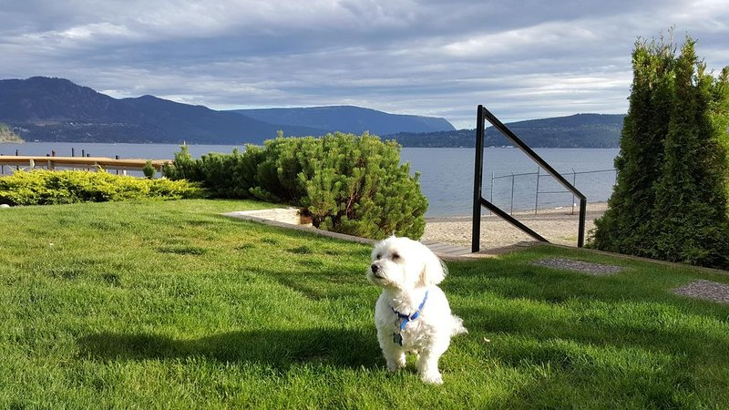 SHUSWAP BEACHFRONT BY THE PARK  VIEWS CORNER UNIT WIFI SECURE PIER BOAT SLIP, holiday rental in Celista
