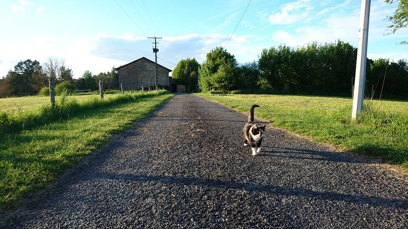 Tommi the farm cat