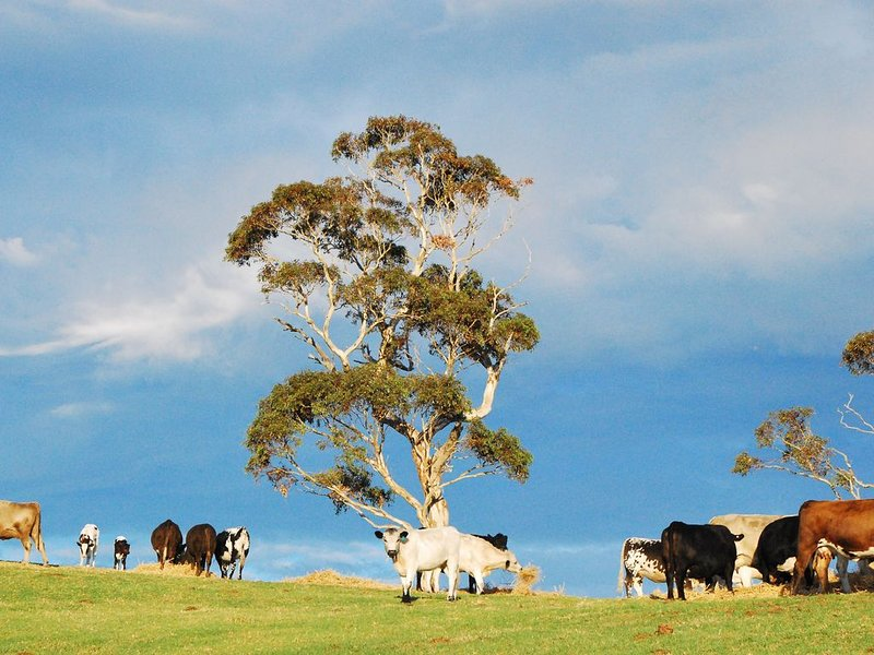 Lisieux Farm-stay Bed and Breakfast, vacation rental in Yankalilla