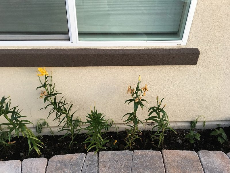 fleurs d'été / printemps dans la cour