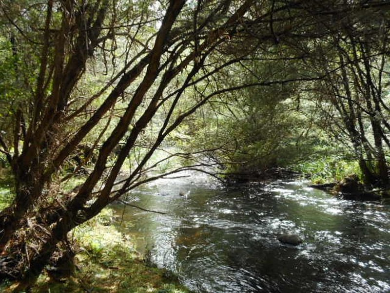 Sparkling Yarra River