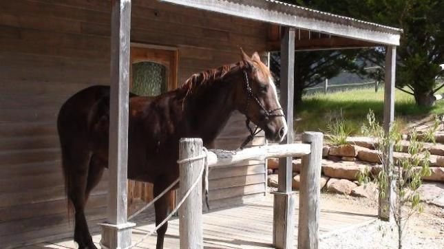 Guest's horse tied up to the front verandah