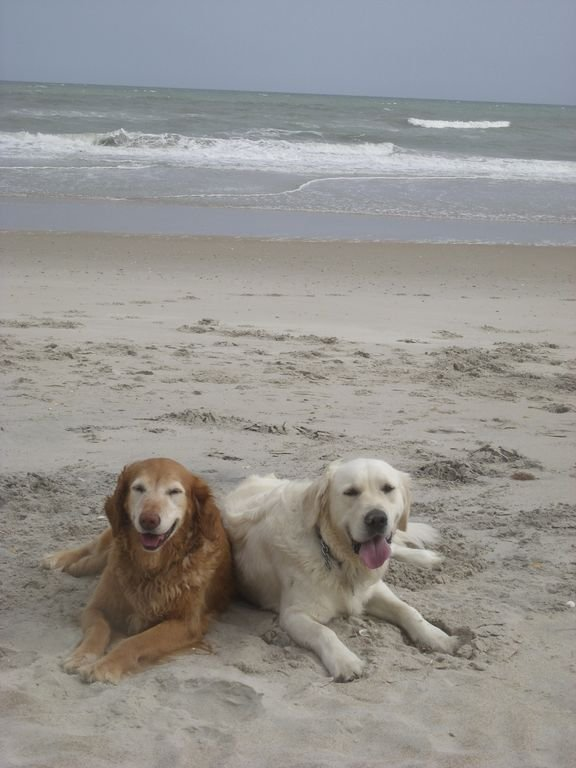 A lazy dog day afternoon on the beach checking out the birds and beach crabs!