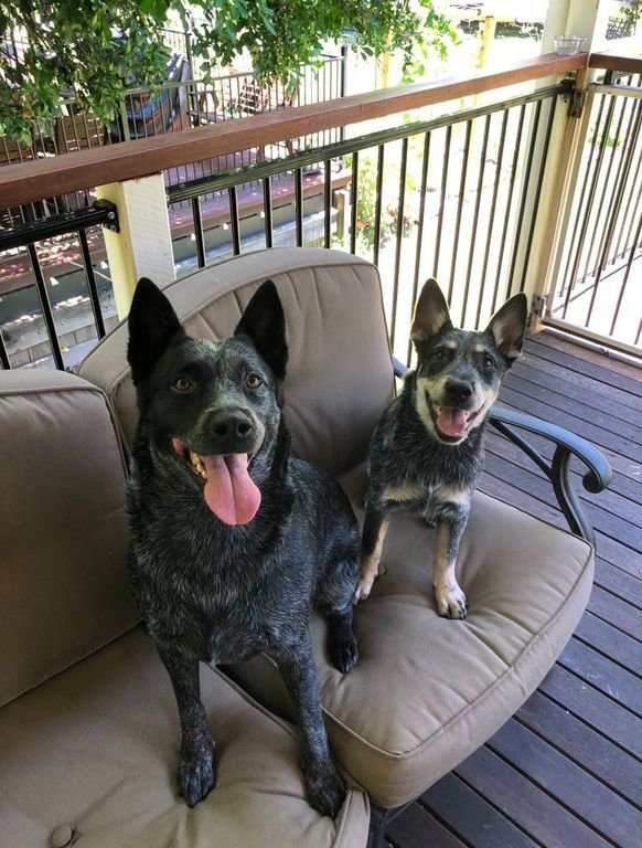 Filhotes de cachorro felizes