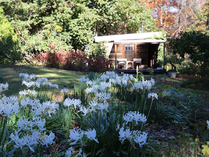 the cabin - eco oasis, holiday rental in Mittagong